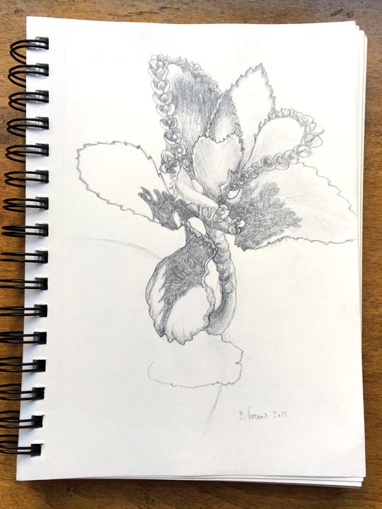 Succulent | pencil on sketch paper